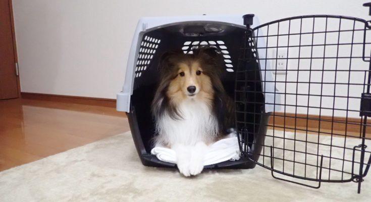 ペットの防災対策をしていますか?